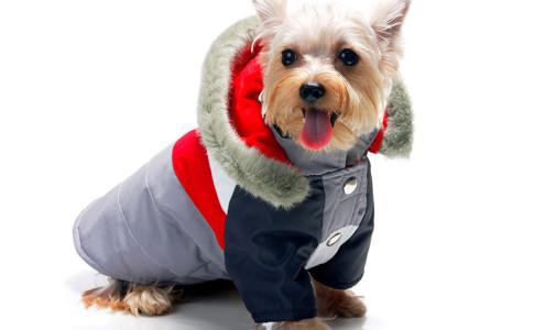 Resultado de imagen para accesorio para perro