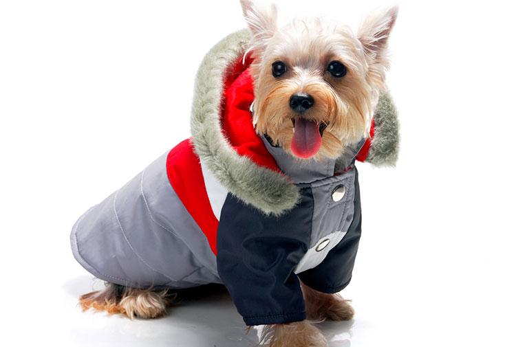 Abrigo para perros