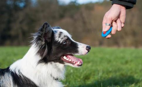 Entrenamiento de perros con clicker