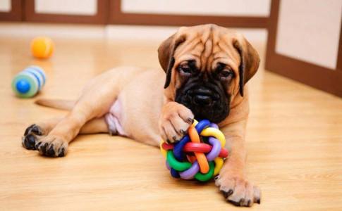 Entrenamiento de perros en casa
