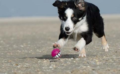 Entrenamiento de perros cazadores