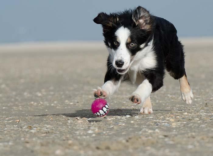 Adiestramiento de perros de caza adiestramiento de perros - Pienso para perros de caza ...