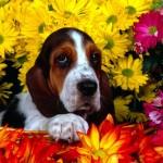 Alergias de los perros