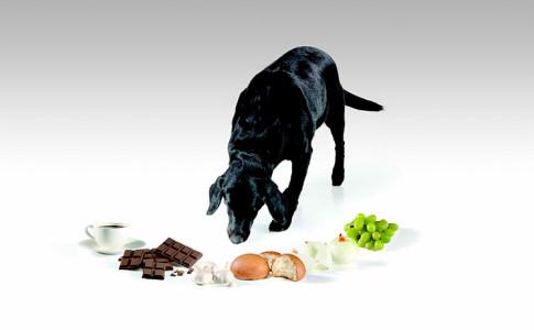 Comidas prohibidas para perros