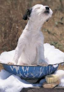 Baño para perro