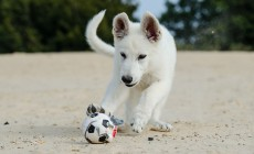 Cómo entrenar al cachorro