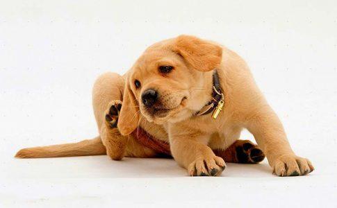 frecuencia de desparasitacion de los perros