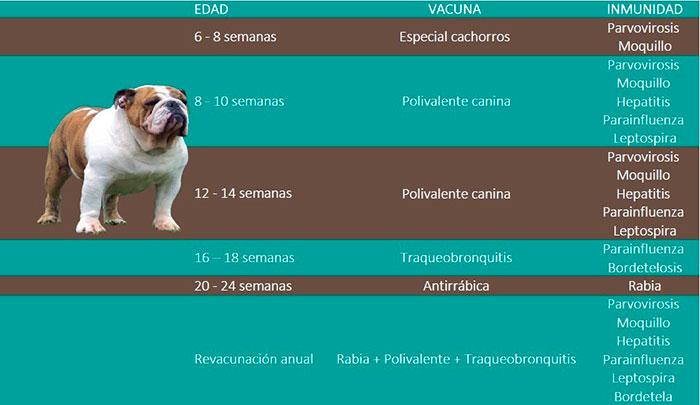 Calendario de vacunas de perros