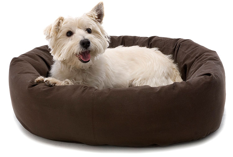 Resultado de imagen para accesorios para perros