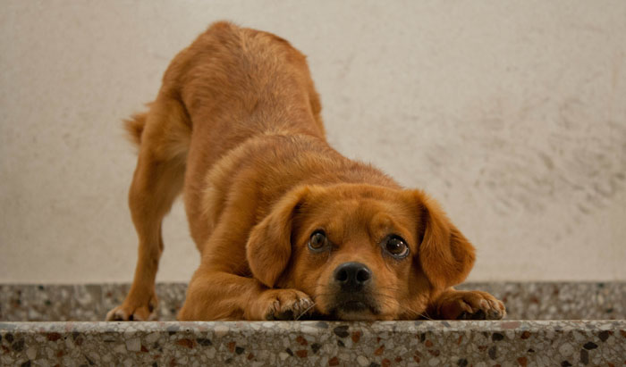 Causas_estres_perros