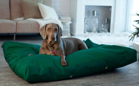 Colchonetas para perros