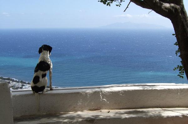 Cómo combatir el estrés en el perro