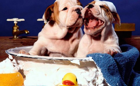 Bañar a un perro por primera vez