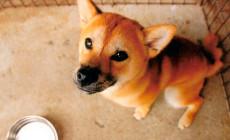 Cantidad de comida para cachorros