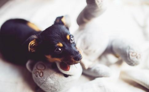 Cuidados de un perro bebé