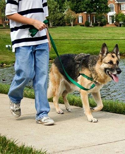 Cuidados del perro fuera de casa