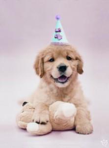 Años de perros cachorros