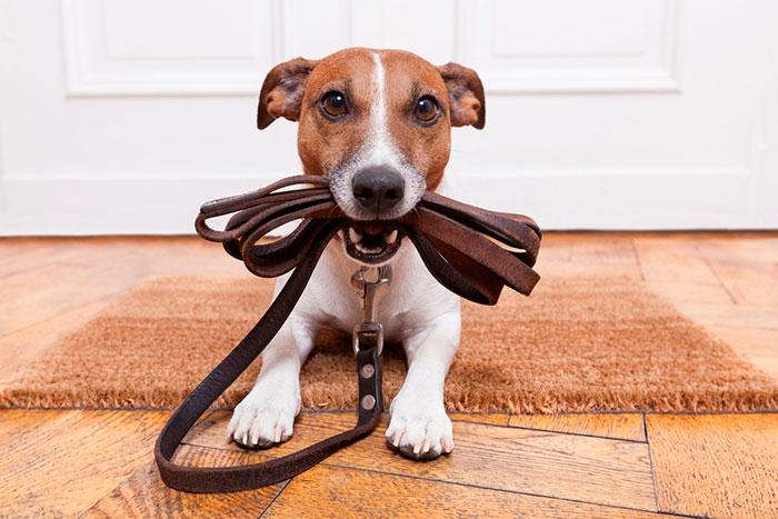 Adiestrar al perro con la correa