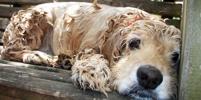 Frecuencia baño perro