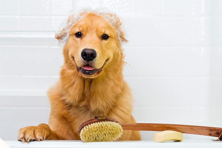 El baño de perros