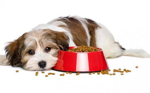 que hacer cuando tu perro no quiere comer