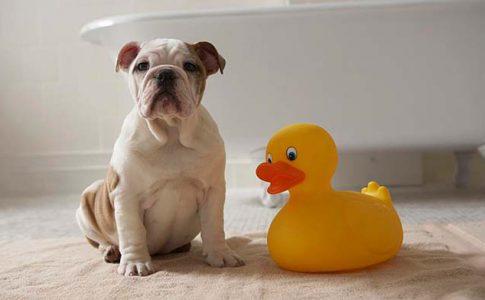 que hago si mi perro tiene miedo a bañarse