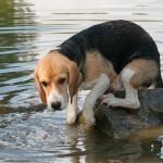 quitarle el miedo al agua a un perro