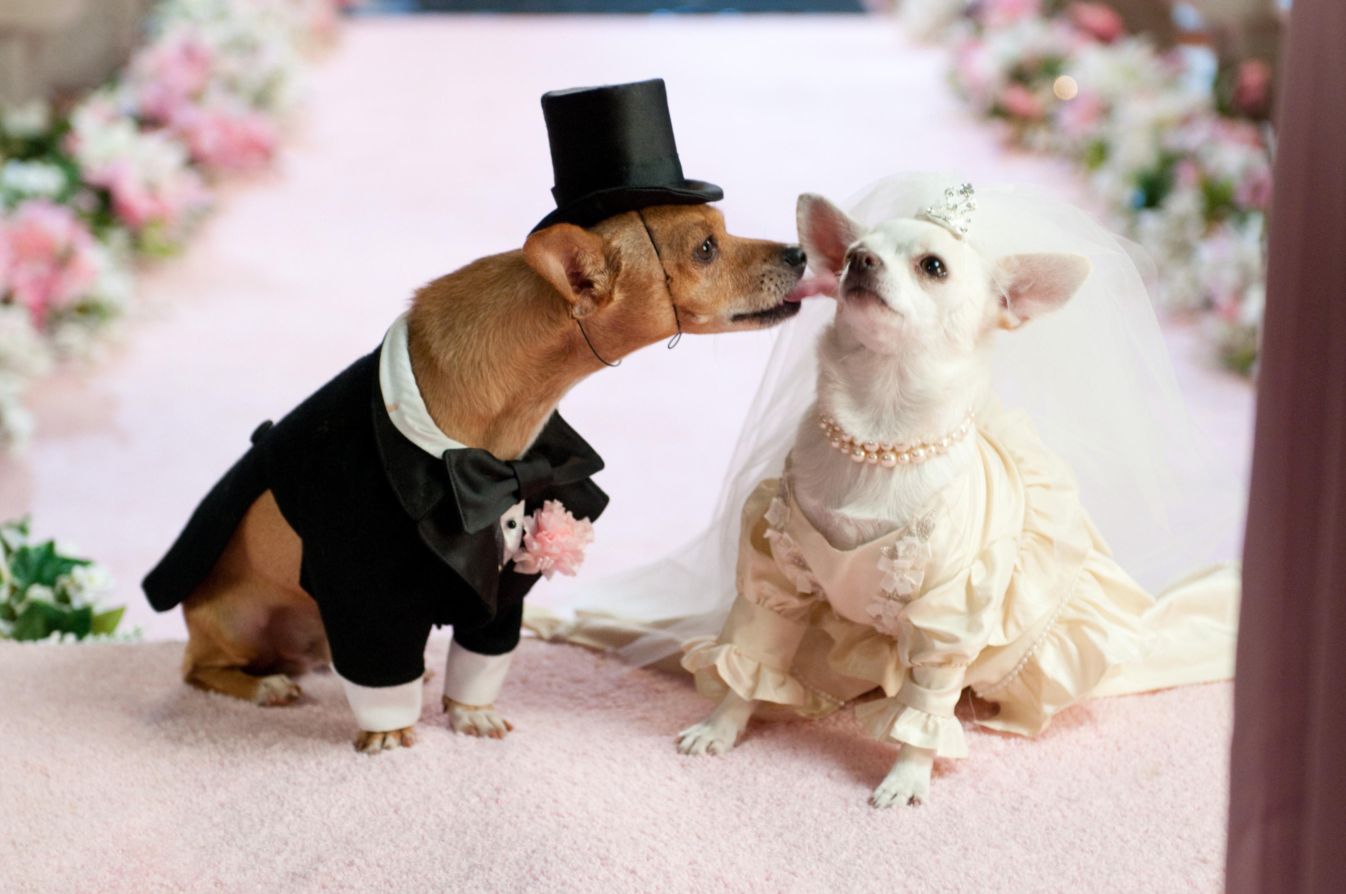 A que edad se puede cruzar un perro apareamiento de perros - Cuando se puede banar a un perro ...
