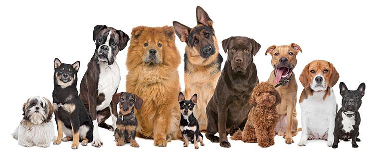 Perros, gatos, conejos y otras mascotas