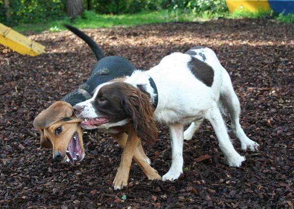 Peleas perros