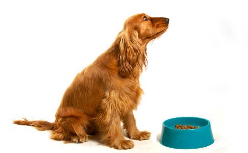 Alimentos para perros light