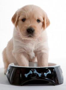 Pienso para perros cachorros