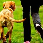 porque el perro mueve la cola