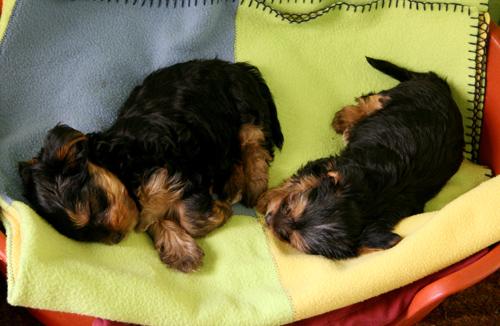 Precios perros