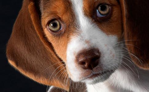 Enfermedades de los ojos en perros