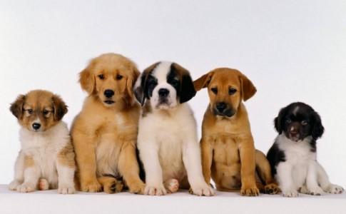 Que perro elegir