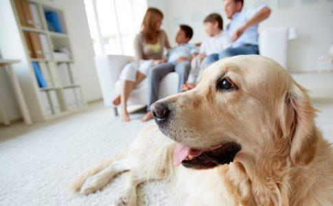 ¿Los perros toleran el aire acondicionado?