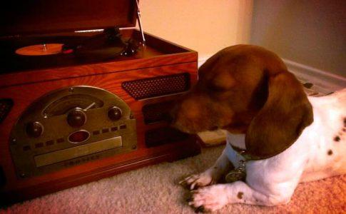 ¿A los perros les gusta escuchar música?