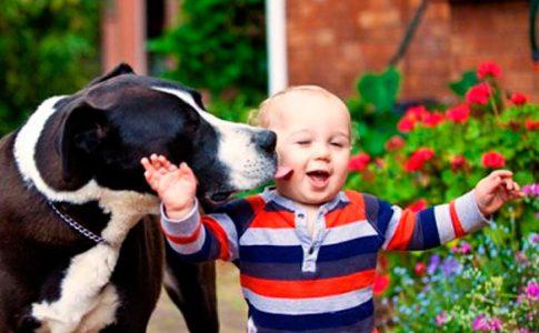 ¿A los perros les gustan los niños?