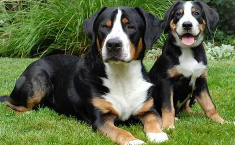edades de perro