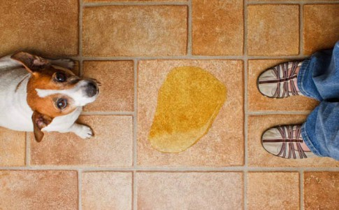 Enseñar a un perro a hacer sus necesidades