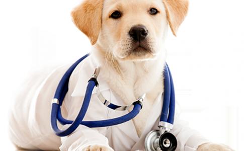 Castrar o esterilizar a tu perro