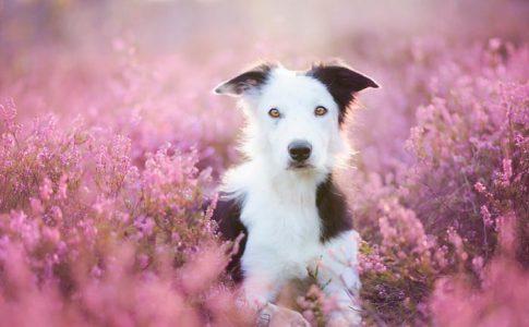 ¿Cuándo esterilizar a una perra?