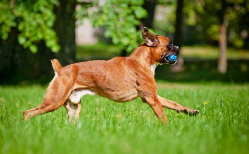 ¿Cuándo puedo hacer ejercicio con mi perro?
