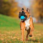 Productos para entrenar al perro