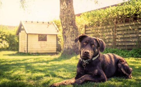 Trucos para acostumbrar al perro a las visitas