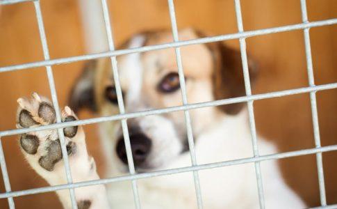 Qué es mejor adoptar a un perro en protectoras o en particulares