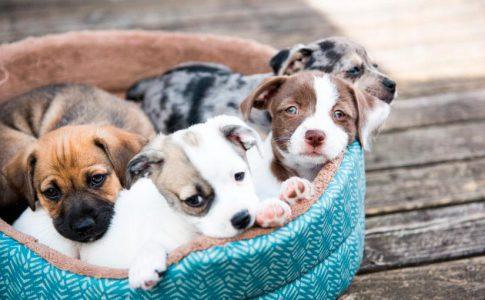 Cómo debe ser la alimentación de un cachorro de perro