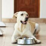 Elegir la alimentación para perros adultos