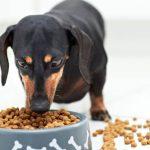 Pérdida de apetito en perros esterilizados